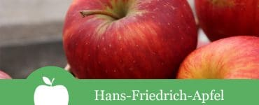 Hans-Friedrich-Apfel