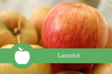 Lancelot Apfelsorte