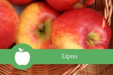 Lipno Apfelsorte