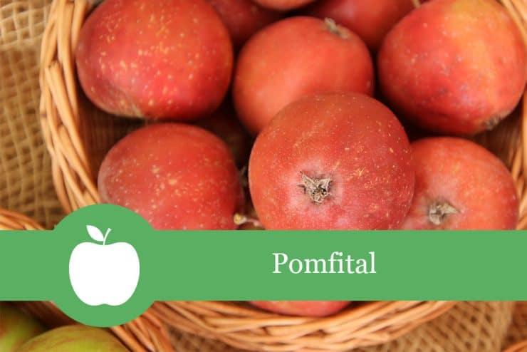Pomfital