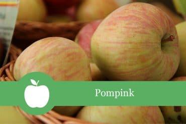 Pompink Apfelsorte