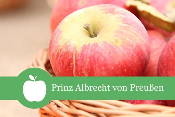 Prinz Albrecht Apfelsorte