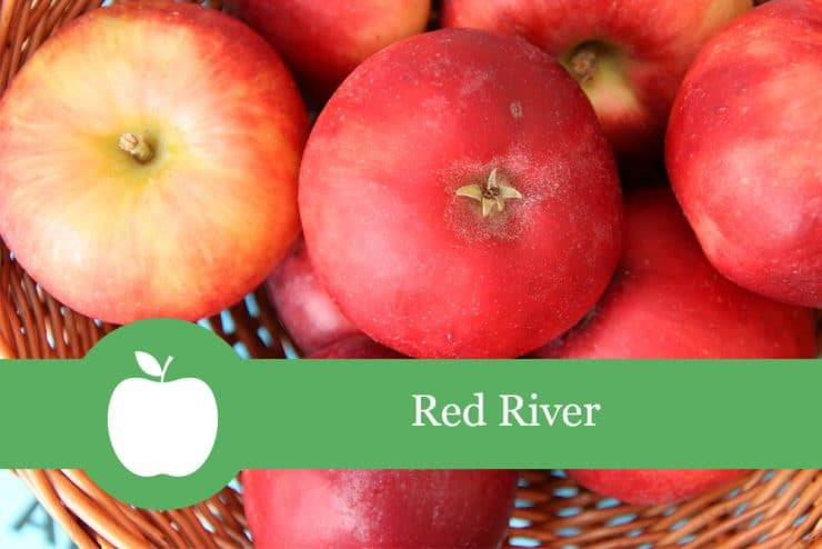 Apfelsorte: Red River