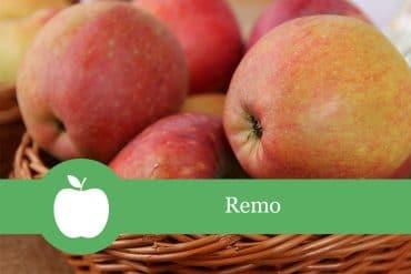 Remo Apfelsorte