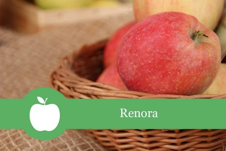 Renora - Apfelsorte