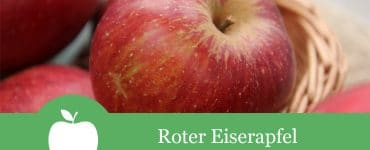 Roter Eiserapfel