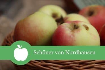 Schöner von Nordhausen