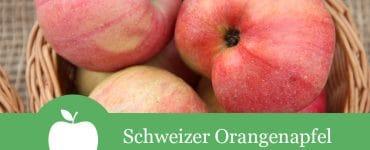Schweizer Orangenapfel
