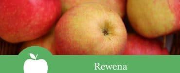 Rewena