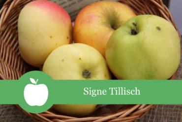 Signe Tillisch