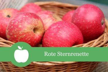 Rote Sternrenette