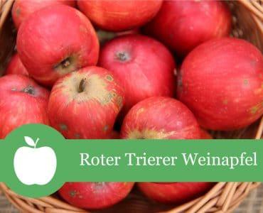 Roter Trierer Weinapfel