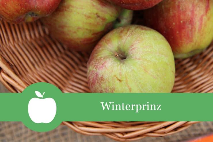 Winterprinz - Apfelsorte