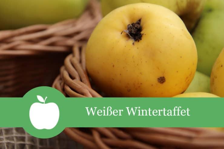 Weißer Wintertaffet